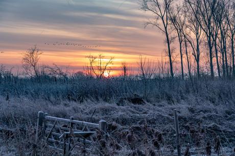 Frisse zonsopkomst Ooijpolder