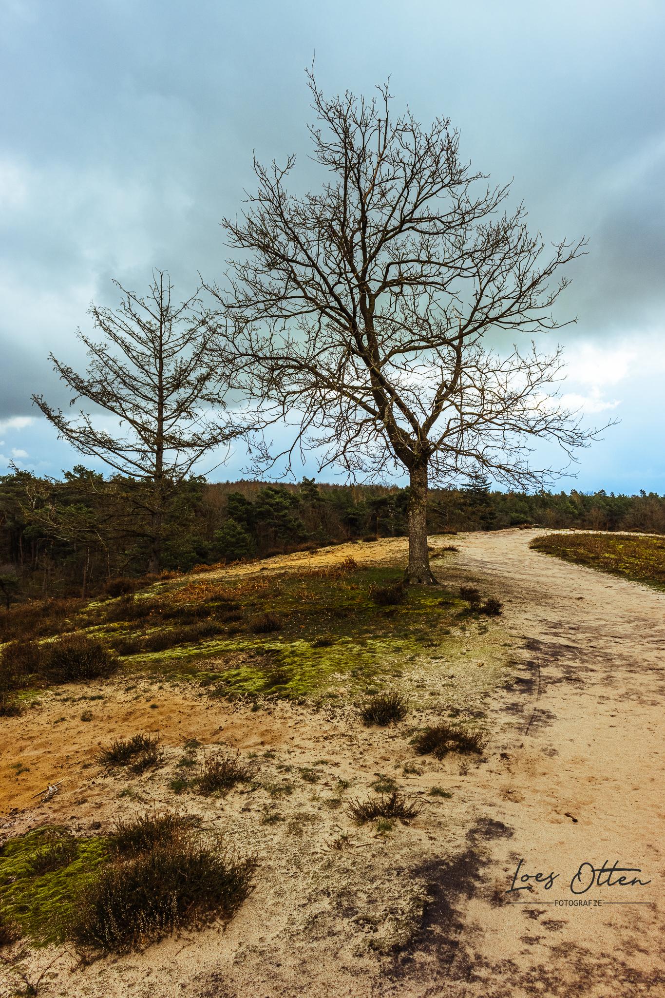 Nationaal Park De Maasduinen - De voorjaarskleuren in de Maasduinen met typisch Nederlandse luchten. - foto door LoesOtten op 14-04-2021 - locatie: Bergen, Nederland - deze foto bevat: maasduinen, nationaal park, voorjaar, kleuren, landschap, wandeling, wolken, landschapsfotografie, wolk, lucht, fabriek, natuurlijk landschap, afdeling, boom, hout, takje, gras, kofferbak
