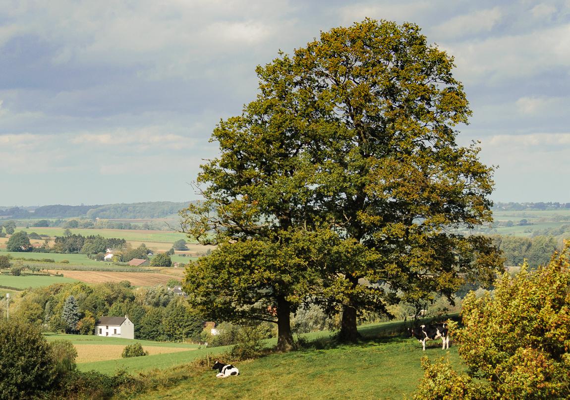Verte - oktober - foto door capture1 op 11-04-2021 - deze foto bevat: lucht, wolk, fabriek, natuurlijk landschap, boom, gras, tinten en schakeringen, grasland, weide, landschap