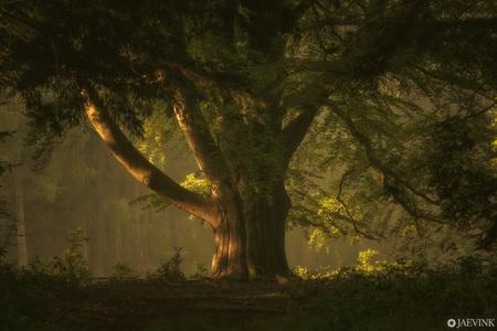 Stumbled upon a tree - Stumbled upon a tree - foto door vwinke op 15-04-2021 - deze foto bevat: bos, boom, licht, landschap, zonsopkomst, fabriek, natuurlijk landschap, mensen in de natuur, hout, kofferbak, takje, boom, bladverliezend, zonsopkomst, schemer