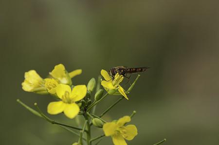 Photography - Fauna & Flora - foto door focuscabrio op 14-04-2021 - locatie: Elversele, 9140 Temse, België - deze foto bevat: bloem, fabriek, bestuiver, insect, geleedpotigen, bloemblaadje, plaag, kruidachtige plant, gras, honingbij