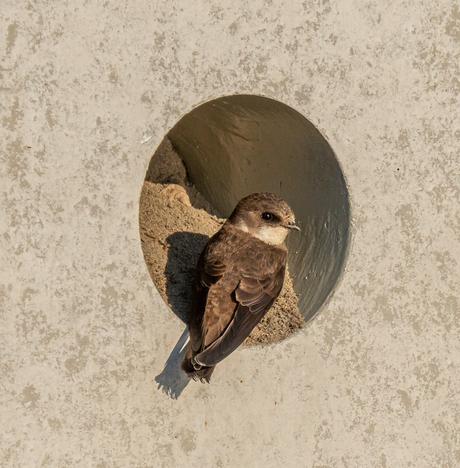 Betonnen nest van een oeverzwaluw