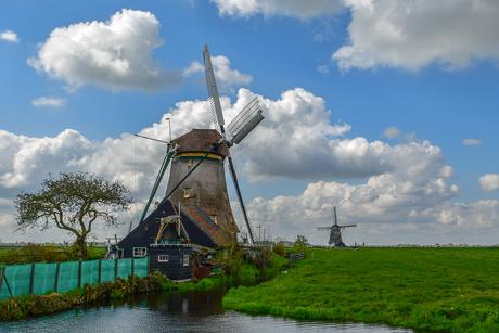 Hollands.....