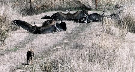 Mijn Reizen - En op de grond  kun je helemaal zien hoe groot ze zijn   hier was een groep bezig met een kadaver   de Jakhals  had ook al voor gezien gehouden  met  - foto door Stumpf op 13-04-2021 - locatie: India - deze foto bevat: ecoregio, fabriek, krokodil, gras, terrestrische dieren, grasland, amerikaanse alligator, alligator, grass familie, reptiel