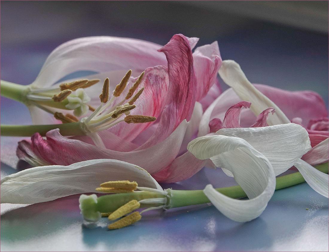 bloemenrestjes................ - hoe mooi kunnen ze zijn................... - foto door alizoom op 17-04-2021 - deze foto bevat: bloem, fabriek, bloemblaadje, roze, stargazer lelie, terrestrische plant, kunstbloem, pedicel, takje, snij bloemen