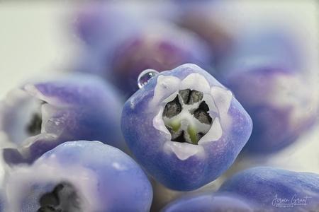 Close up blauw druifje  - Dit is een close up van een blauw druifje....   - foto door Jeroen-Fotografie op 11-04-2021 - deze foto bevat: bloem, purper, bloemblaadje, fabriek, paars, elektrisch blauw, bloeiende plant, detailopname, natuurlijk voedsel, macrofotografie