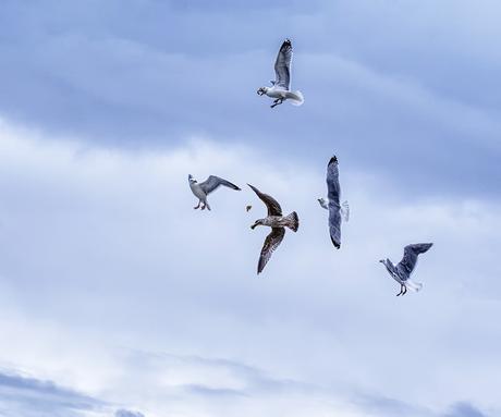 Luchtgevecht boven de Noordzee bij Texel