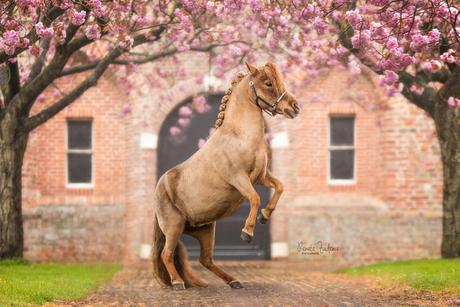 Power pony