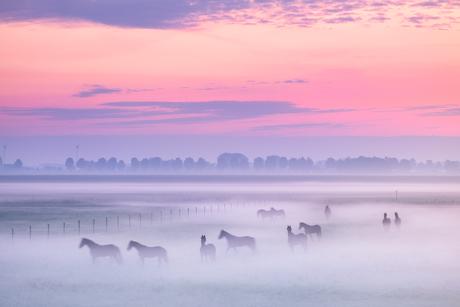 Paarden in de ochtendmist