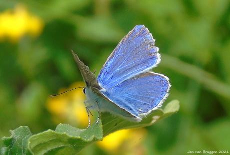 Fotogenieke vlindertjes