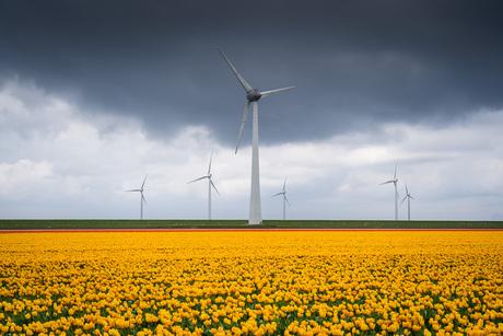 Geel tulpenveld met wind turbines en bewolkte lucht