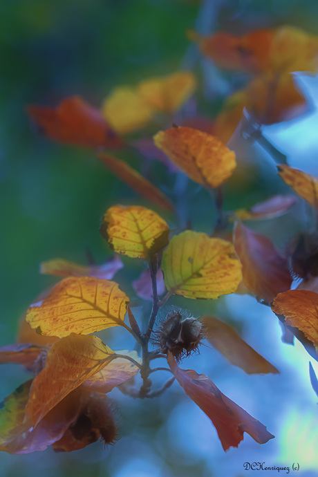Autums colors