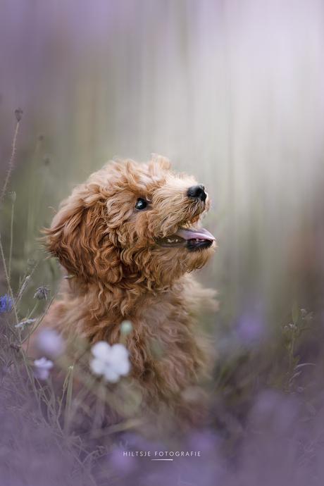 Balou tussen de bloemen