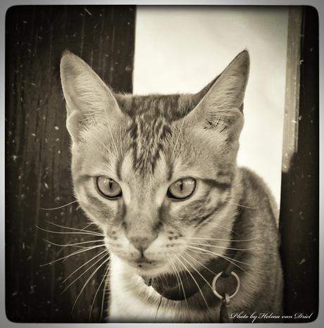 Kitten....
