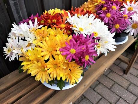 20210513 142316  GROOT kijken . Deze  kleurrijke bloemen komen zo van de kweker en door de variatie een  lust om te zien . Iedereen weer bedankt voor de reacties  op de vorige fotos  .Groeten en een fijne dag verder Jos Dries  .