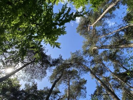 Overloonse bossen als kikker