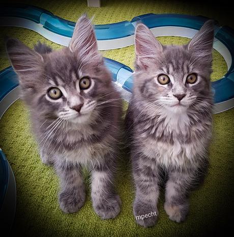 Ivy en Mats