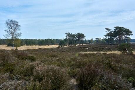 Heide bij Landgoed Tongeren