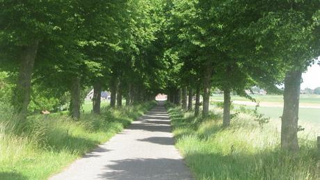 Weggetje met bomen Zevenbergen