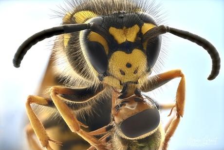 Insecten knuffel.....