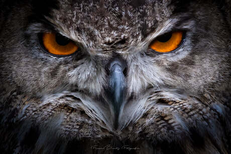 Don't mess with the wrong Owl ...