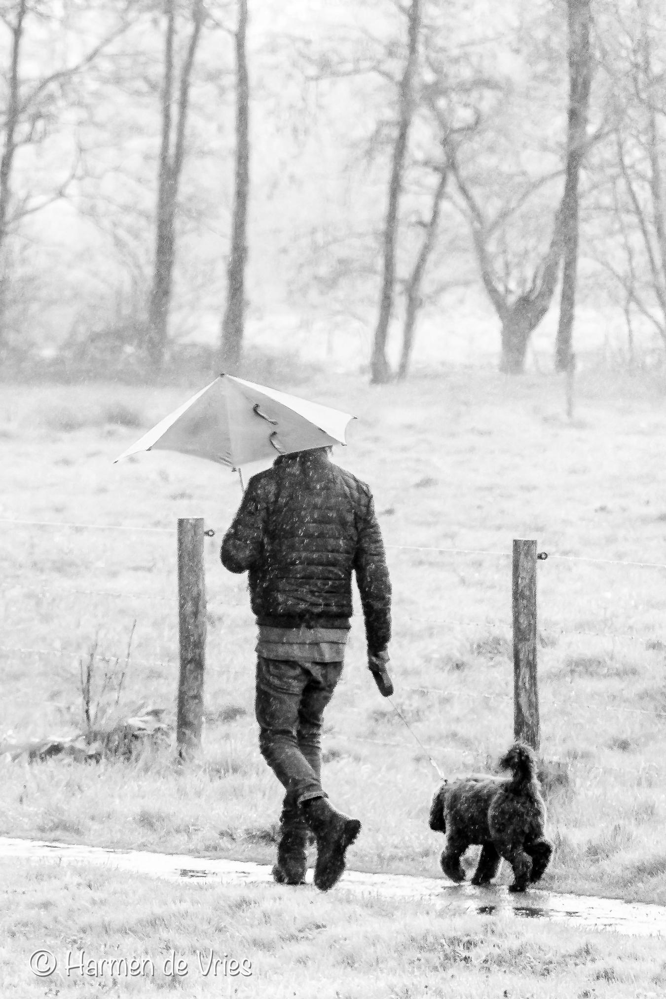 It's a rainy day, but duty calls - Ook wanneer het nagenoeg de hele dag regent, laat je trouw je hond uit.  - foto door hjdevries op 29-04-2021 - deze foto bevat: regen, natuur, weer, hond, paraplu, mens, zwartwit, hond, fotograaf, fabriek, paraplu, mens, staand, carnivoor, zwart en wit, grijs, stijl