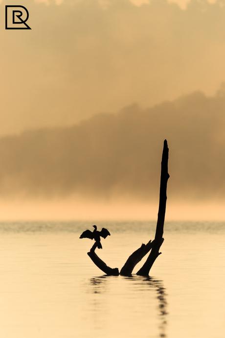 Aalscholver in de mist