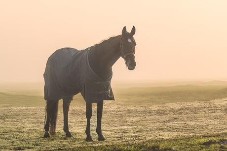 Lekker warm gekleed in de mist
