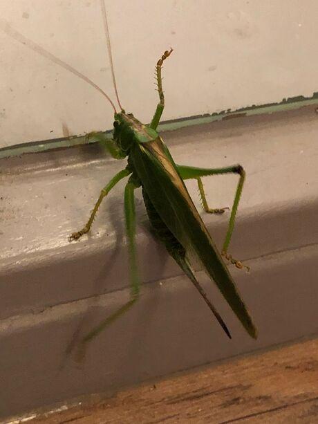 Grasshopper vensterbank