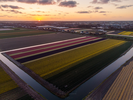 Bollenvelden van boven. - Bollenvelden vanuit de lucht. - foto door Corne102 op 14-04-2021 - locatie: 2211 Noordwijkerhout, Nederland - deze foto bevat: drone, dji, bollenstreek, bollenvelden, tulpen, bloemen, hyacinten, veld, lucht, hoog, mini 2, water, sloot, lucht, wolk, licht, zonlicht, horizon, ochtend, vliegreizen, luchtvaart, landschap, vliegtuigen
