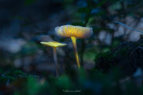 Magische paddenstoel