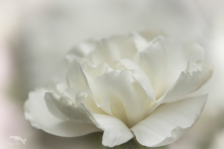 white....