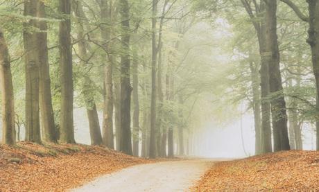 Plankenwambuis-Herfst