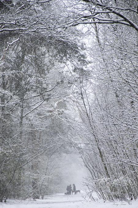 April doet wat hij wil.... - dat was de ochtend van 7 April, toch wel weer een fotogeniek moment - foto door Rohs op 10-04-2021 - locatie: Bakelse Bossen, 5709 Helmond, Nederland - deze foto bevat: natuurlijk landschap, fabriek, sneeuw, afdeling, hout, takje, kofferbak, lichaam van water, boom, bevriezing