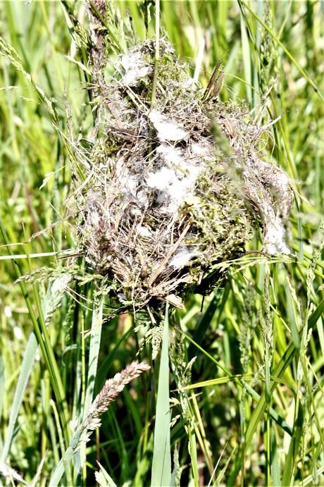 vogel nestje in planten