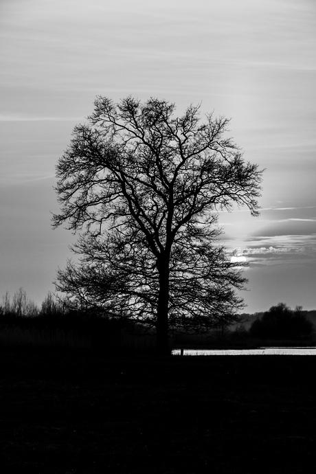 Sunset black and white