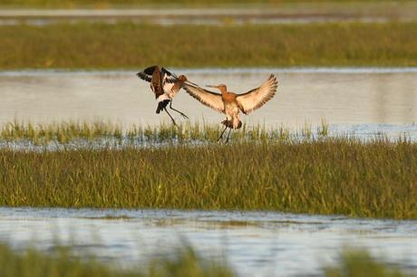 De mooiste vogels van de polder