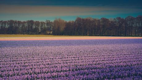 De 'Provence' gewoon in Nederland