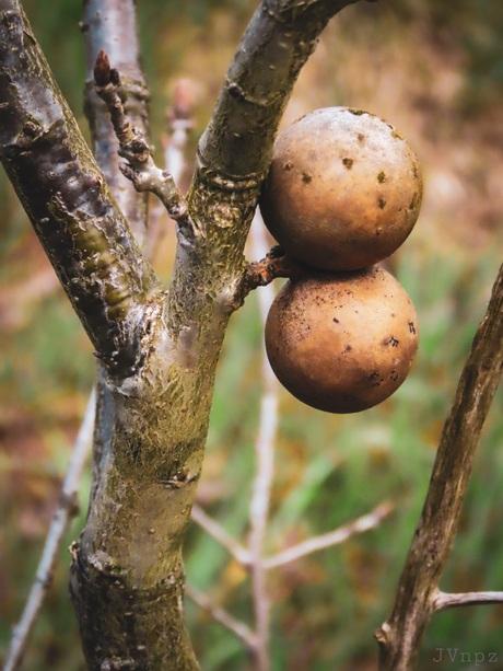 Ballenboom