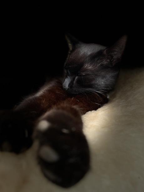 Sleeping beauty no. 2