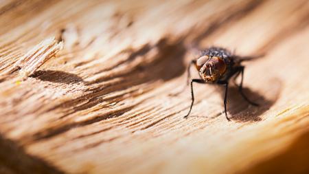 V L I E G - wanneer een vlieg een rustpauze neemt in de zon... - foto door Lucimage op 12-04-2021 - locatie: België - deze foto bevat: macro, vlieg, oog, insect, geleedpotigen, blauw, hout, huis vliegen, plaag, parasiet, landschap, detailopname