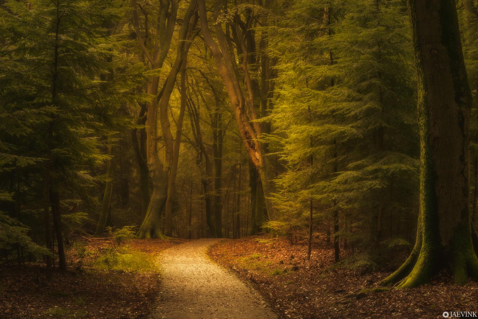 Entrance - Entrance - foto door vwinke op 17-04-2021 - deze foto bevat: bos, bomen, sprookjes, licht, natuur, landschap, moody, forest, fabriek, natuurlijk landschap, afdeling, hout, boom, mensen in de natuur, kofferbak, terrestrische plant, gras, weg oppervlak