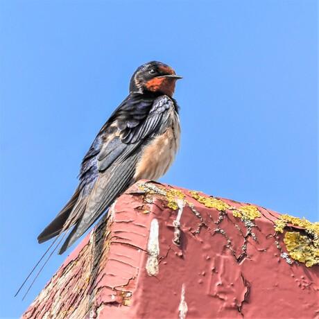 Mijn profielfoto-zwaluw