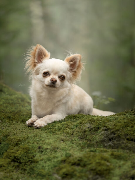 Puppy Captain