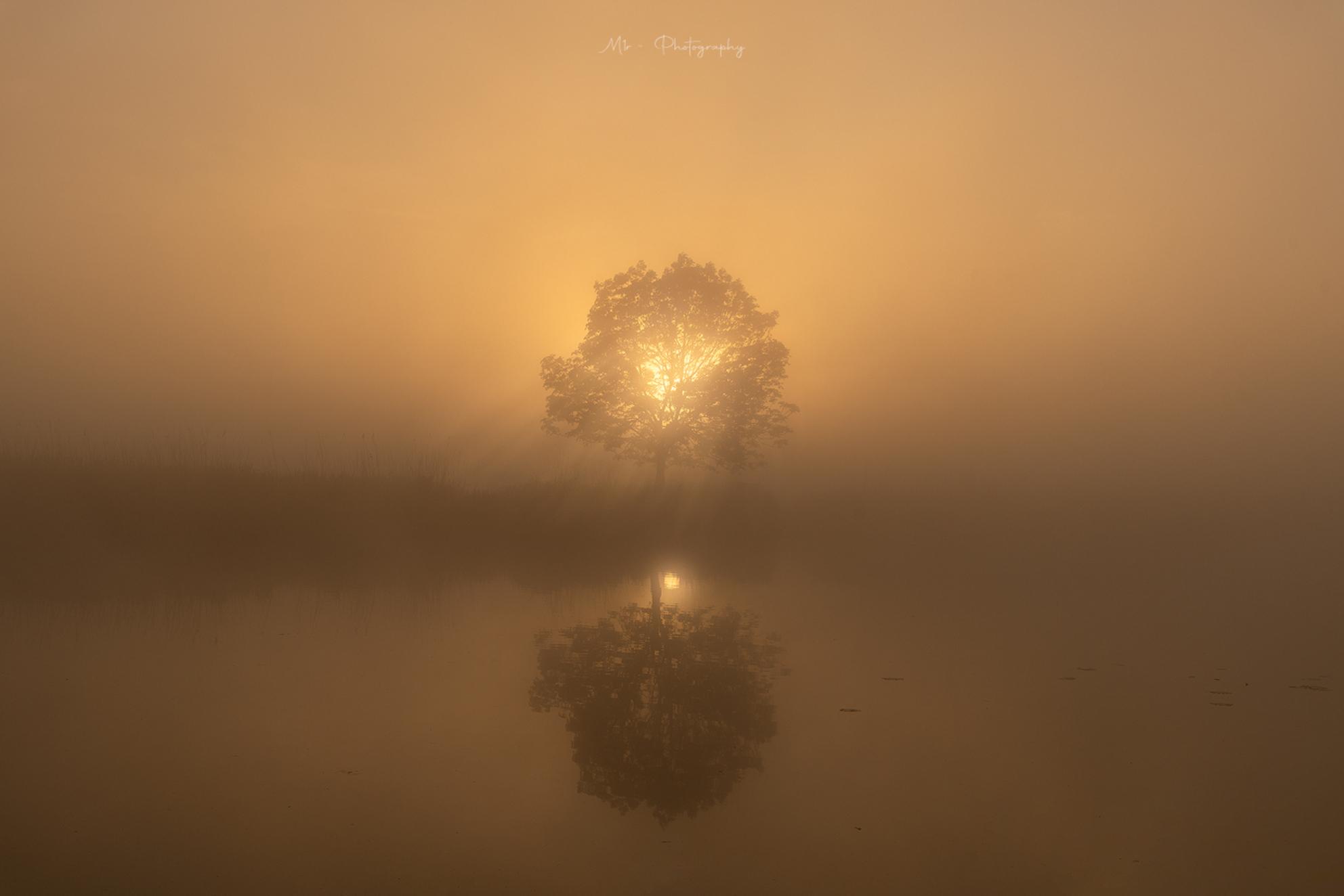 Surrounded by Gold - Een magisch moment bij zonsopkomst. - foto door m1rphotography op 08-04-2021 - deze foto bevat: landschap, licht, lucht, zonsopkomst, reflectie, lente, tegenlicht, meer, polder, water, lucht, natuurlijk landschap, mist, astronomisch object, horizon, boom, zonsopkomst, zon, landschap