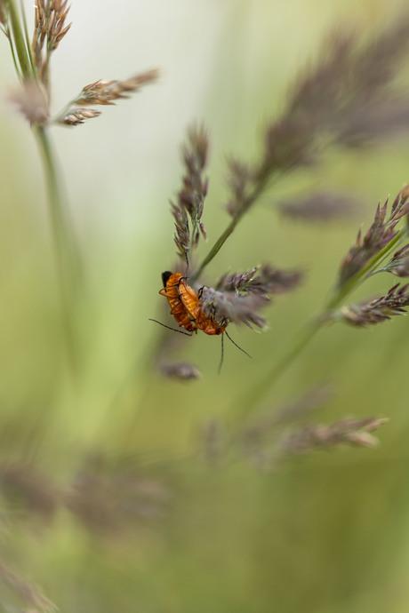 Knuffelende insecten