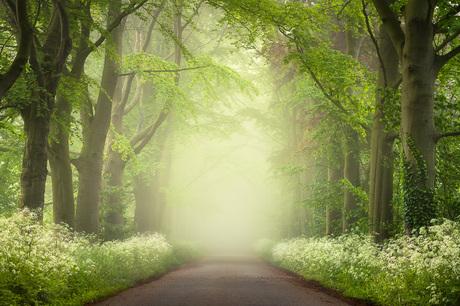 Een weg door het mistige bos in de lente