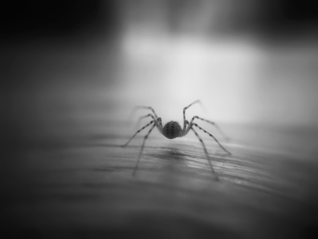 The back of a small spider.