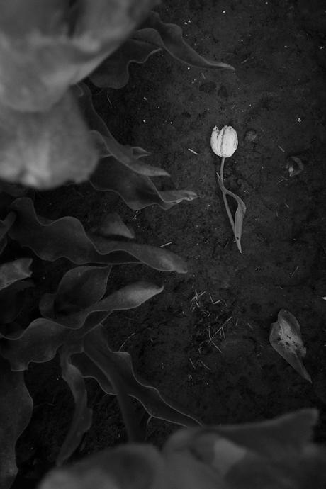 Fallen, not forgotten