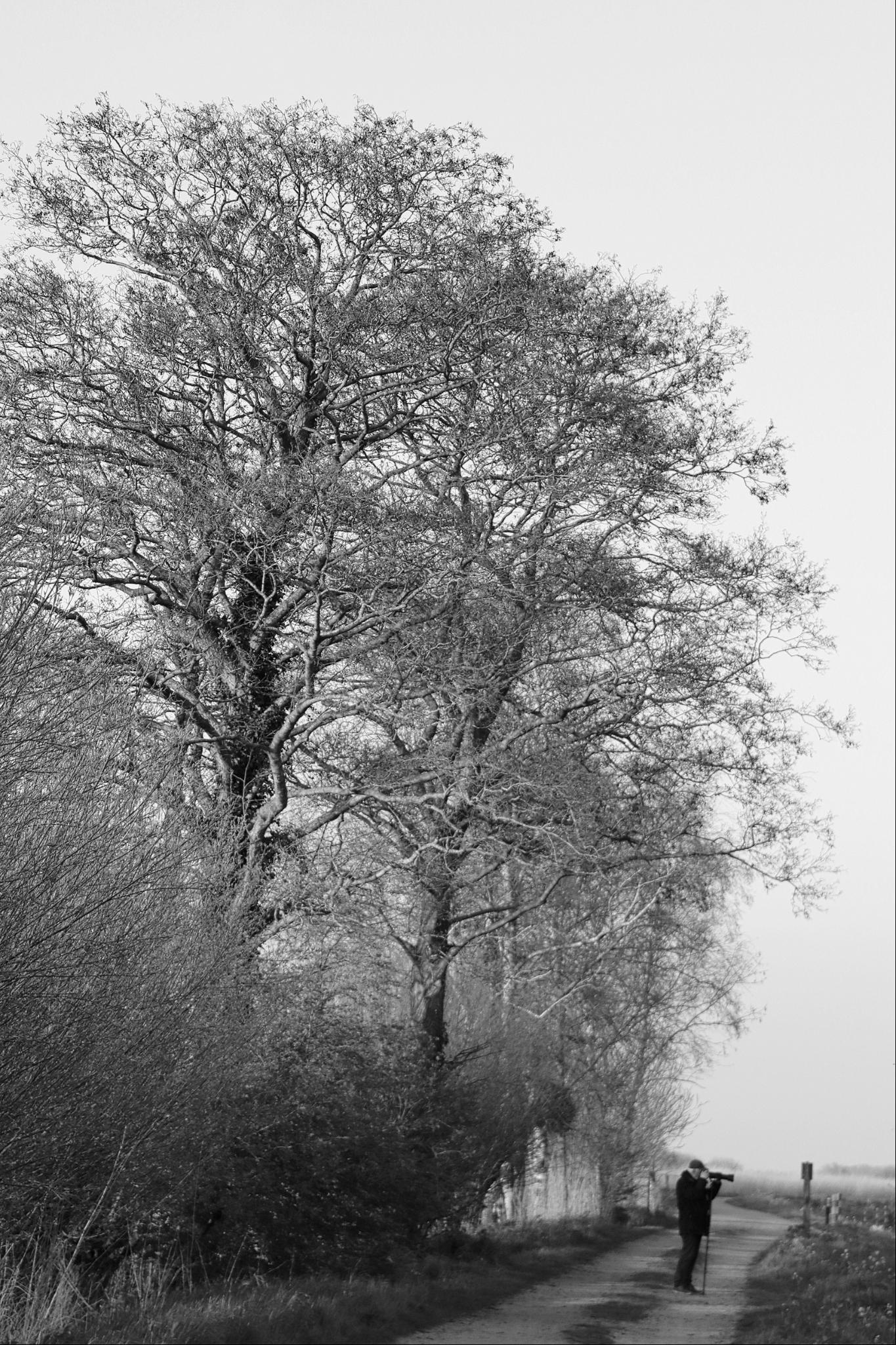 hoge bomen - - - foto door onne1954 op 21-04-2021 - deze foto bevat: bomen, zwartwit, fotograaf, hoge bomen, fabriek, lucht, atmosfeer, wit, zwart, boom, natuurlijk landschap, afdeling, hout, zwart en wit